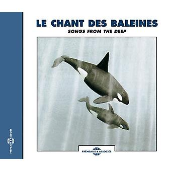 Recordings Of Whale Sounds-Songs From The Deep [CD] USA import