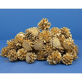 Giant 1kg Bag of Gold Pine or Fir Cones for Christmas Crafts