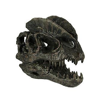 Dilophosaurus Dinosaur Head Fossil Statue Small