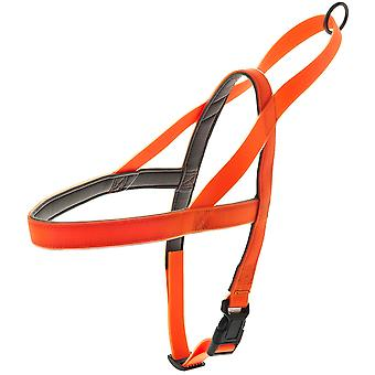 Ferribiella Fun Flat Norw.Harness No Led