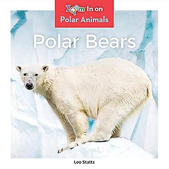 Ours polaires (animaux polaires)