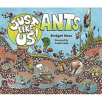 Just Like Us! Ants by Bridget Heos - 9780358003854 Book