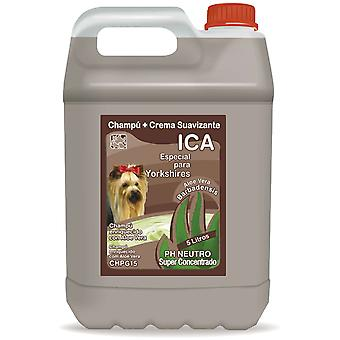 Ica Yorkshire 5Lt Aloe Vera Shampoo (Dogs , Grooming & Wellbeing , Shampoos)