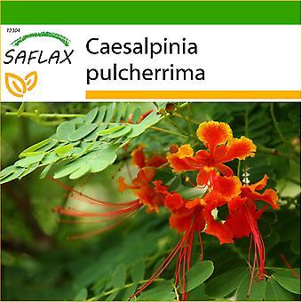 Saflax - 10 seeds - With soil - Mexican Bird Of Paradise - Orgueil de Chine - Orgoglio delle Barbados - Pequeño flamboyan - Pfauenstrauch / Stolz von Barbados