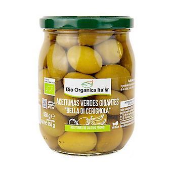 Giant green olives bella di Cerignola 550 g