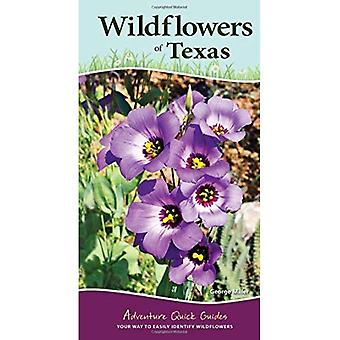 Fleurs sauvages du Texas (Adventure Guides rapides)