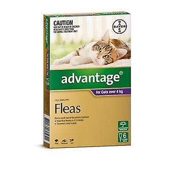 Advantage Purple 6 Pack Large Cat 4-8kg