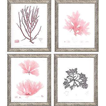 Seaweed iv pk/4 coastal style by paragon