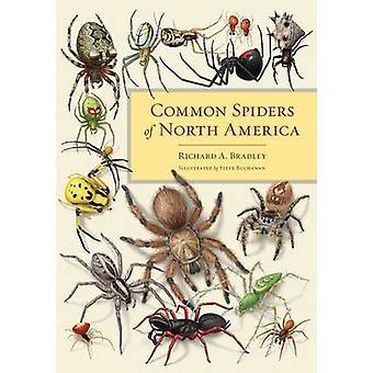 Vanlige edderkopper i Nord-Amerika av Richard A. Bradley - Steve Buchana