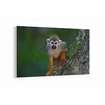 Schilderij - Schattig aapje — 90x60cm