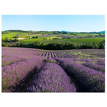 Artgeist Wallpaper Lavender Fields (Decoration , Wall murals , Wall murals standard)