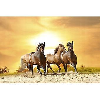 Wallpaper mural hester kjøre i Sunset