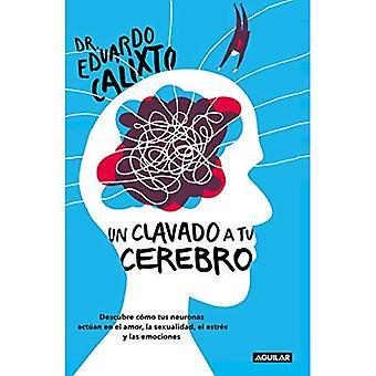 Un Clavado a Tu Cerebro /� Take a Dive Into Your Brain