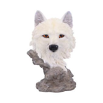 Lumi etsijä pieni susi bust