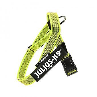 Julius K9 Arnes IDC Cinta väri & harmaa (koirat, kaulukset, liidit ja valjaat)