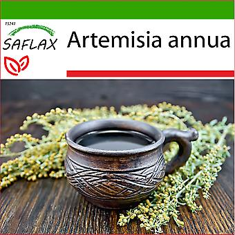 Saflax - 250 Samen - Mit Erde - Sweet Wormwood Qing Hao - Armoise annuelle Qing Hao - Artemisia annuale Qing Hao - Ajenjo dulce Qing Hao - Chinesischer Beifuß Qing Hao