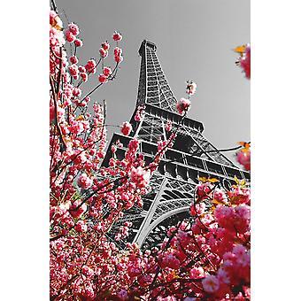 La flor del cerezo poster Torre Eiffel de París