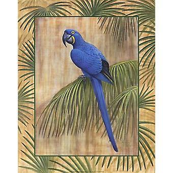 Печать плаката гиацинтовый ара Рон Дженкинс (16 x 20)