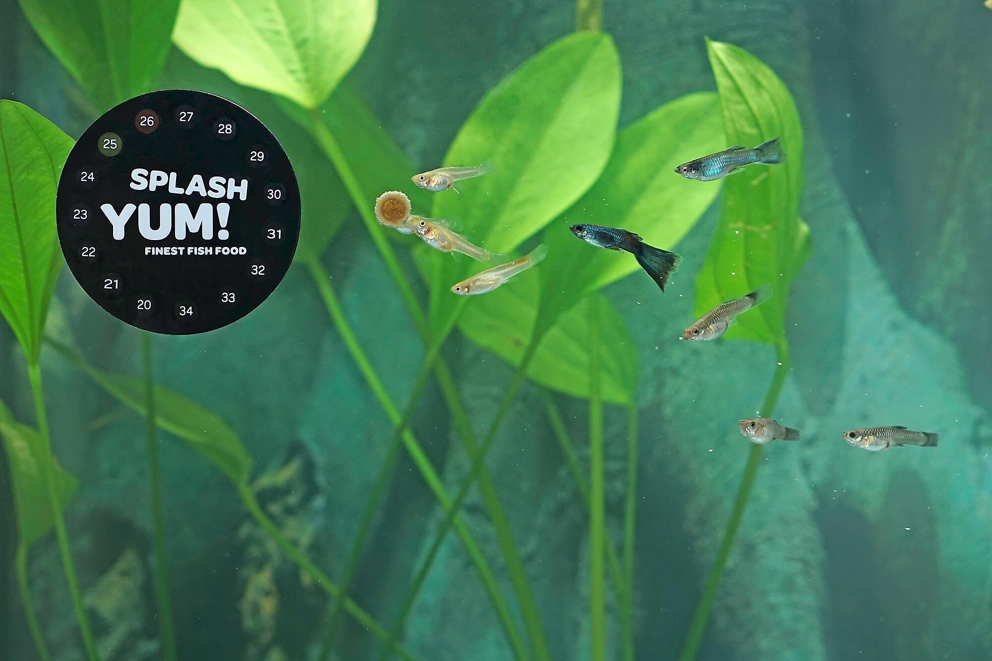 SplashYum! Aquarium Bottomfish Tabs for all ornamental fish with L-Carnitine, Lecithin, Folic Acid Ground Tablets Fish Food Tablets l Catfish Tank Catfish Barben Schmerlen Pleco Saugwelse