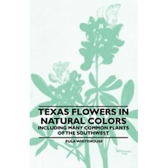 Texas Flowers in Natural Colors  Including Many Common Plants of the Southwest by Whitehouse & Eula