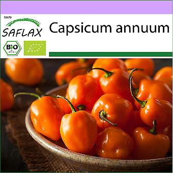 Saflax - 20 sementes - Orgânico - Pimenta Quente - Habanero Laranja - BIO - Piment - Habanero laranja - BIO - Peperoncino - Habanero Orang - Ecológico - Chile - Orégano Habanero - BIO - Chili - Habanero Laranja