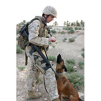 Een soldaat en zijn hond Zoek pauze een water Poster Print by Stocktrek beelden