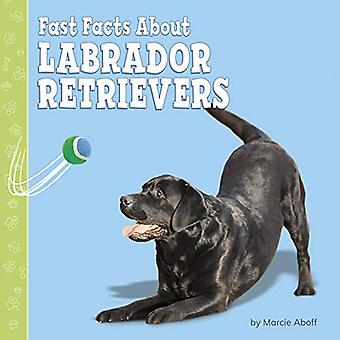Fast Facts About Labrador Retrievers - Fast Facts About Dogs