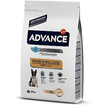 Advance French Bulldog (Dogs , Dog Food , Dry Food)