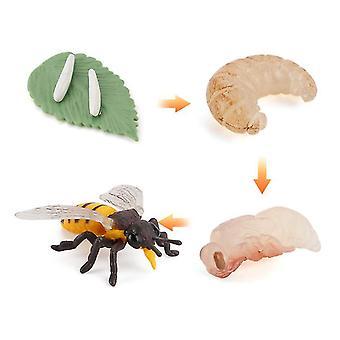 2Pcs Bienen Miniatur Simulation Insekten Wachstumszyklus Wissenschaft und Bildung kognitivemodell Kinder Lernspielzeug 4pcs az8886