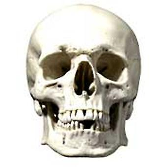 Skull Halloween Card Fancy Dress Mask