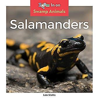 Salamandres (animaux du marais)