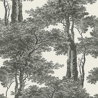 Passepartout árvores wallpaper Rasch