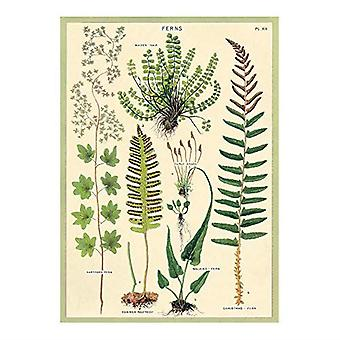Cavallini Fern Wrapping Paper Poster