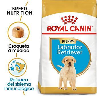 Royal Canin Labrador Retriever Junior (Dogs , Dog Food , Dry Food)