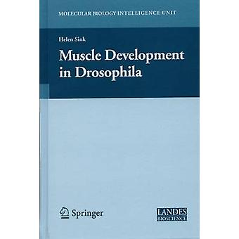 Muscle Development in Drosophilia by Sink & Helen