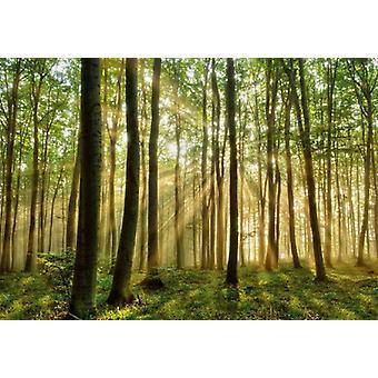 Fond d'écran Forêt murale