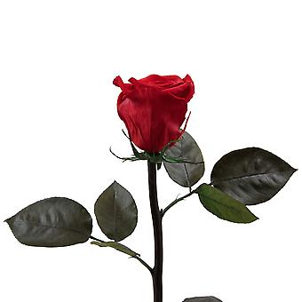 Preserved rose red with stem durable 3 years 45-50 cm