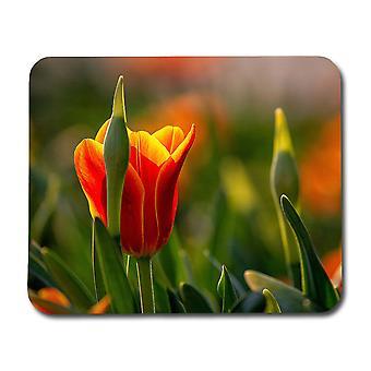 Tulipán egér mat