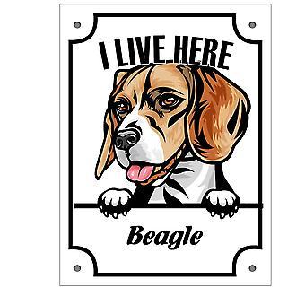 De plaat Beagle Kikande hondteken Engels