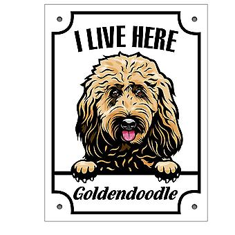 Metal plate Golden doodle Squinting dog sign English