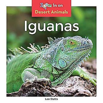 Iguanes (animaux de désert)