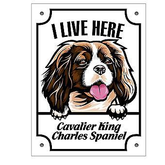 Tin plaat Cavalier Koning Charles Spaniel Kikande hondenteken