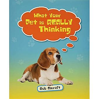 Reading Planet KS2 - What Your Pet is REALLY Thinking - Level 2: Mercury/Brown band (Rising Stars Reading Planet)