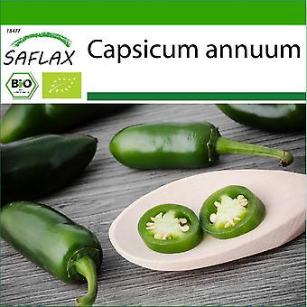 Saflax - 20 semillas - Con suelo - Orgánico - Chile caliente - Jalapeño temprano - BIO - Piment - Jalapeño temprano - BIO - Peperoncino - Jalapeño Temprano - Chile - Jalapeño Temprano - BIO - Chile - Jalapeno Temprano