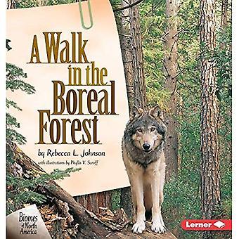 En promenad i den boreala skogen