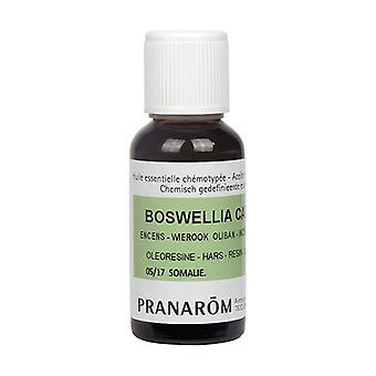 Lemon tree chemotyped essential oil - organic zest 100 ml of essential oil