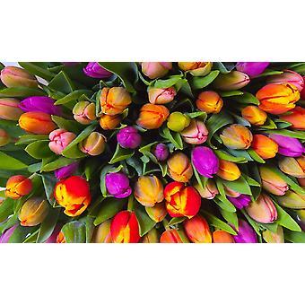 Piatnik Tulips Jigsaw Puzzle (1000 Pieces)