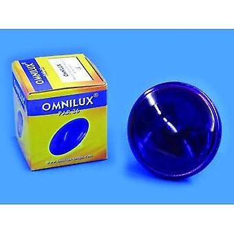 Omnilux Par-36 Lampe Halogen 6 V G53 STC 30 W Violet dimmable