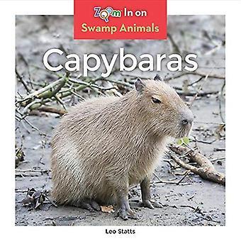 Capybaras (animaux du marais)