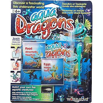 Aqua Drachen